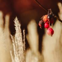 bacche-autunno-giardini-di-sissi-1